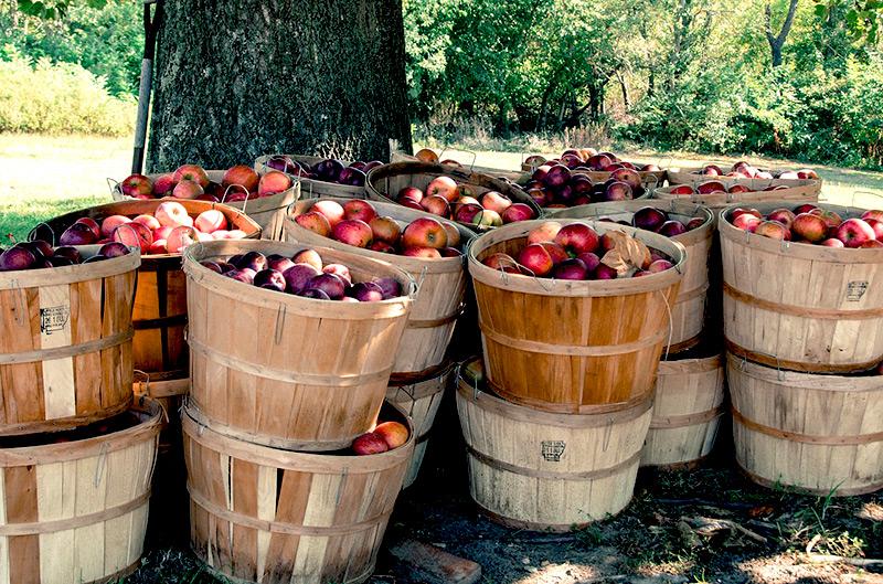 Jesienne skarby - jabłka w koszach