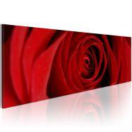 Obraz - Róża północy (120x40 cm)