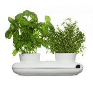 Podwójny wazon na zioła Sagaform Herbs & Spices